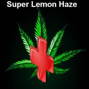 Rescue weed Super Lemon Haze