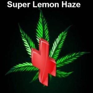 Rescue weed Super Lemon Haze