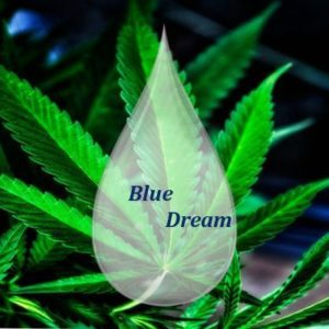 Blue Dream 1000 mg CBD - DIY