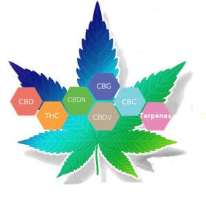 CBD spectre complet