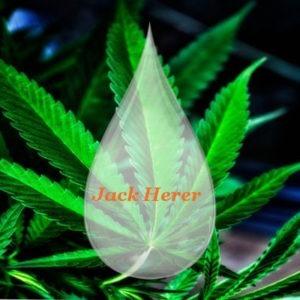 liquide jack herer 1000 mg CBD