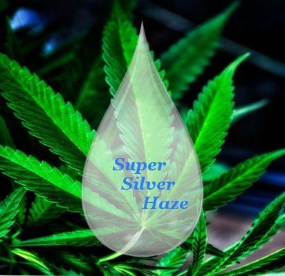 Liquide CBD super silver haze 1000 mg